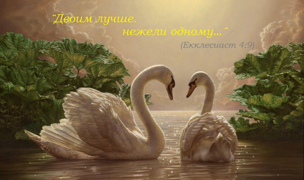 Двоим лучше, нежели одному, лебеди символ любви